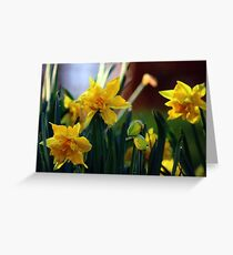 Double Daffodils Greeting Card