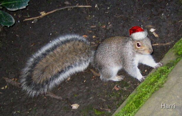 Squig in Christmas hat by Harri