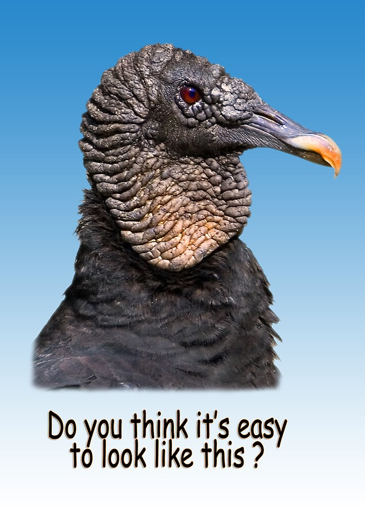 """Black Vulture  """"Do You Think It's Easy"""" Greeting Card by Delores Knowles"""