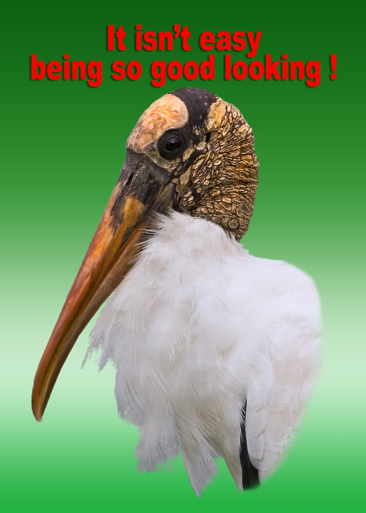 """Wood Stork """"It's not Easy"""" Greeting Card by Delores Knowles"""