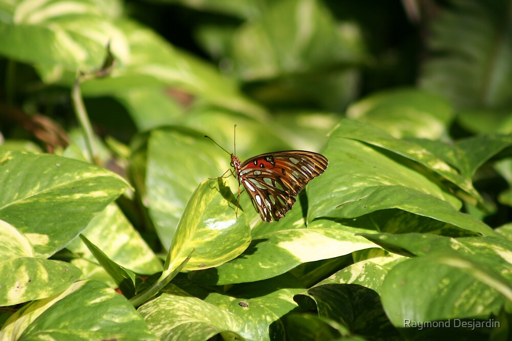 butterfly on pothos by Raymond Desjardin