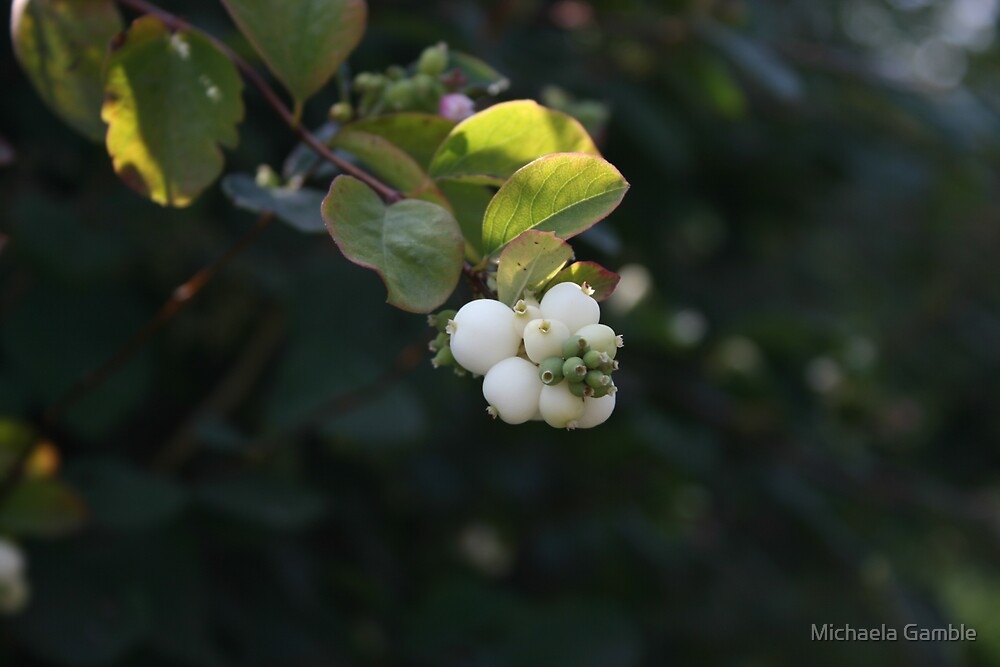 Berries by Michaela Gamble