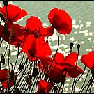 Poppies by SWEEPER