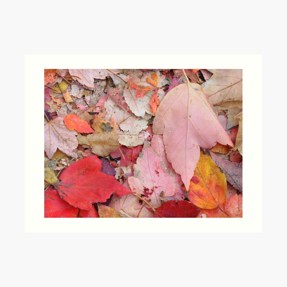 Leaves Fall Art Print