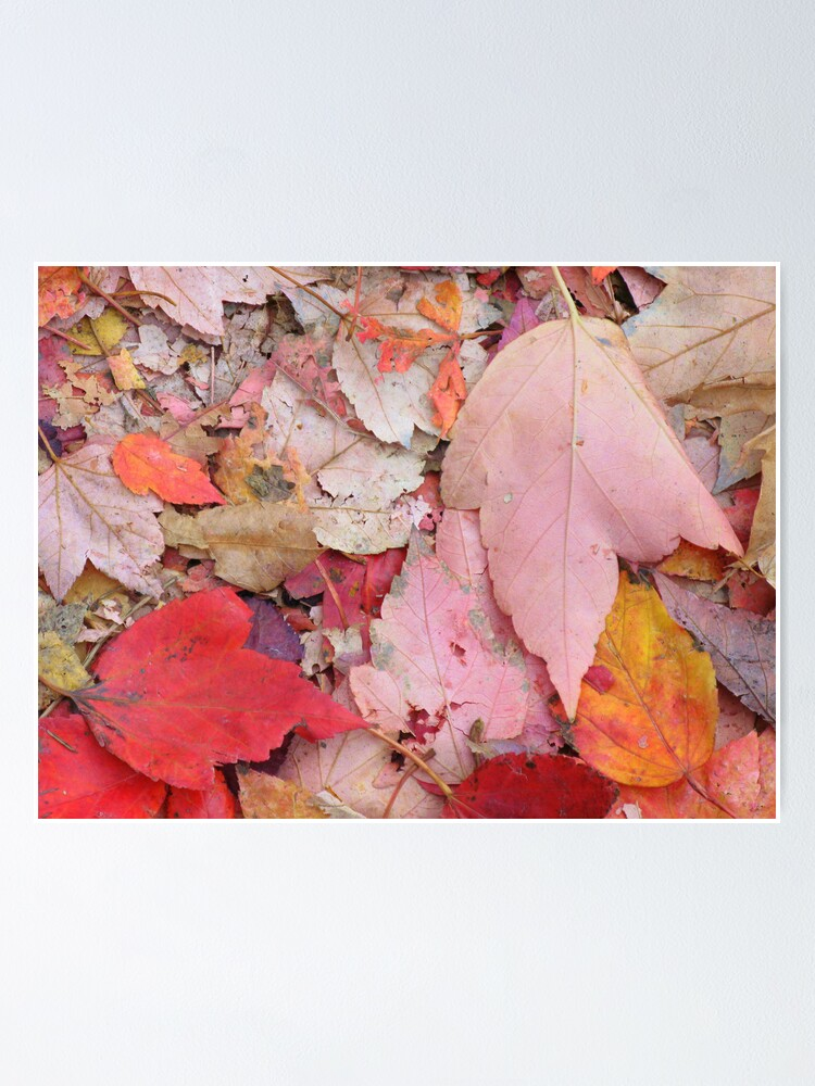 Alternate view of Leaves Fall Poster