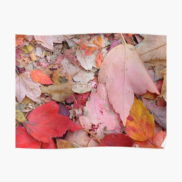 Leaves Fall Poster