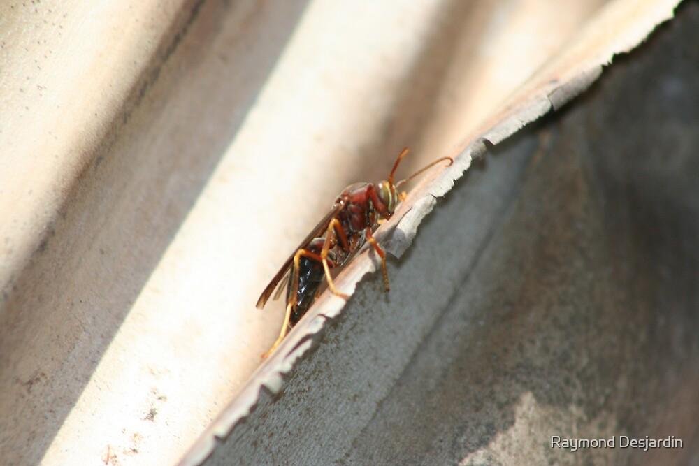 wasp profile by Raymond Desjardin