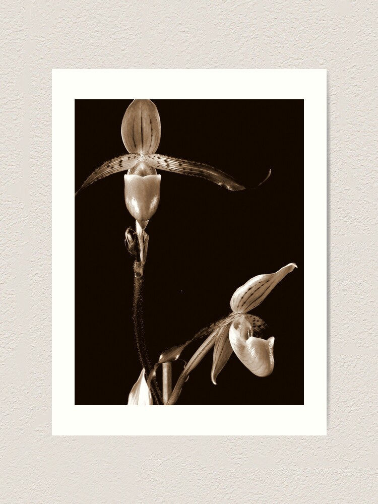 Alternate view of Two Orchids Art Print