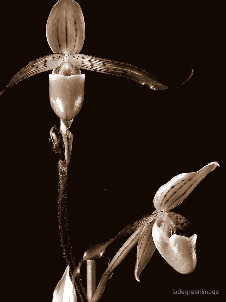 Two Orchids by jadegreenimage