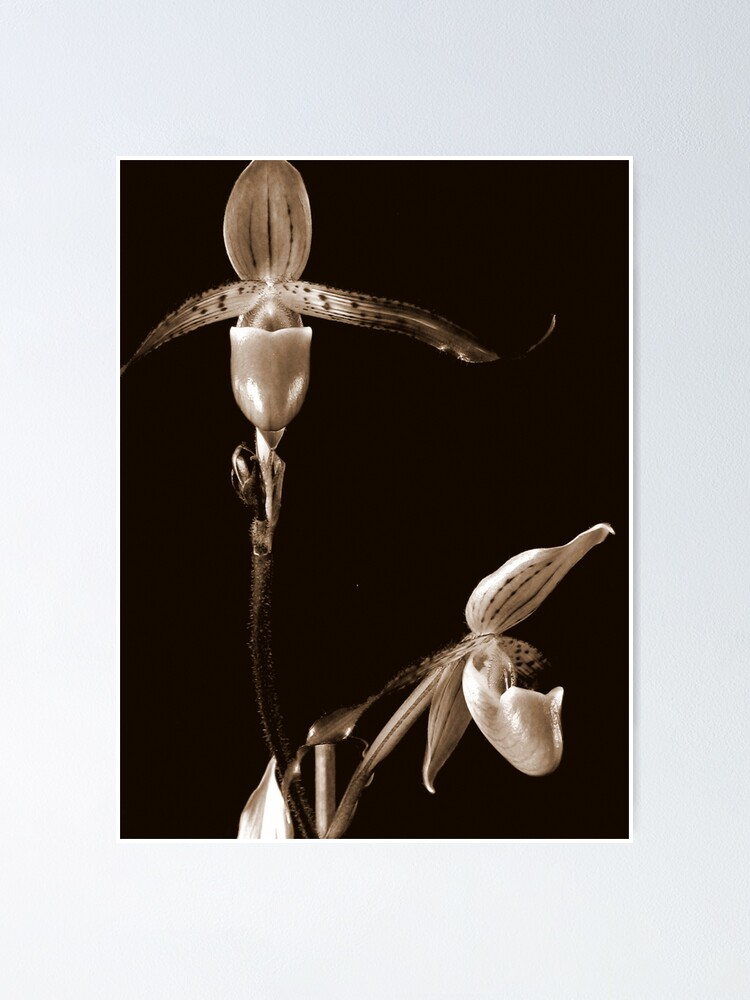 Alternate view of Two Orchids Poster