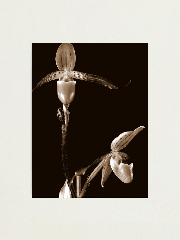 Alternate view of Two Orchids Photographic Print