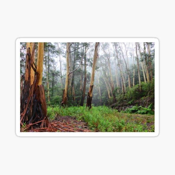 Stringy Bark in the Mist - Mt Wilson NSW Australia Sticker