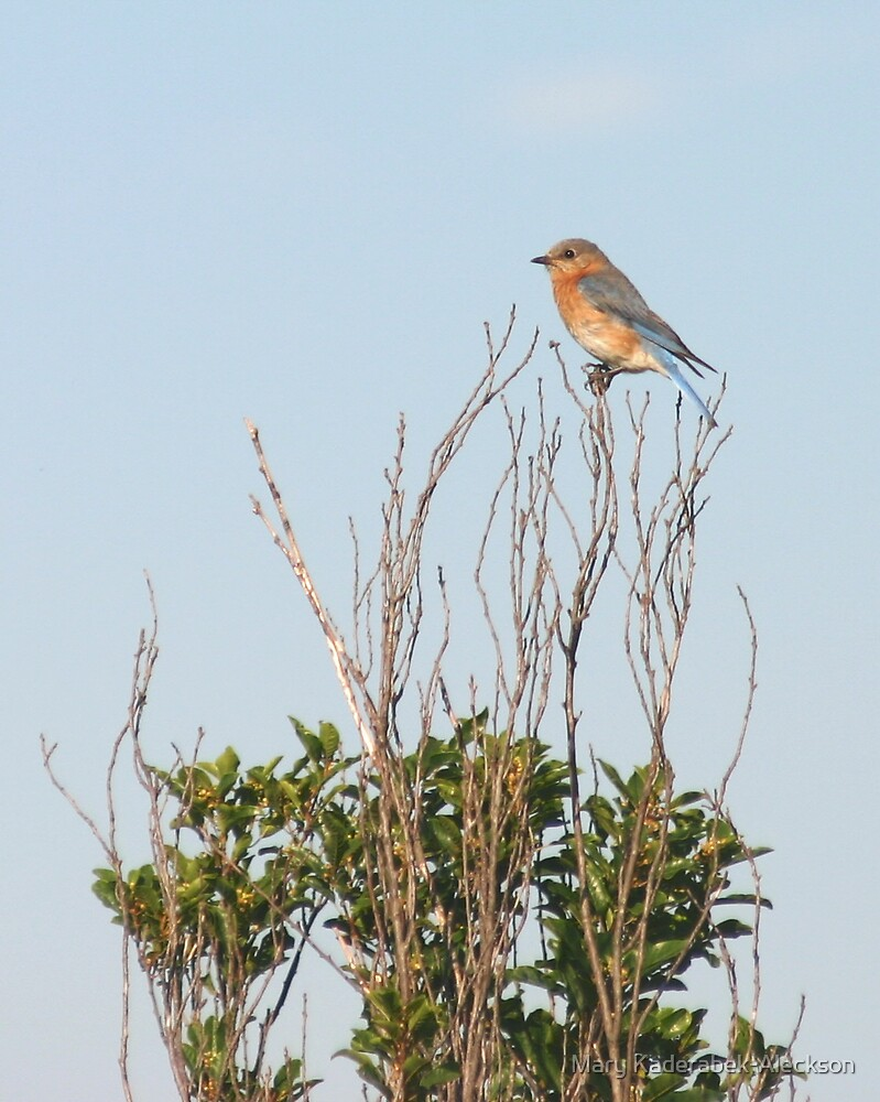 Bluebird  by Mary Kaderabek-Aleckson
