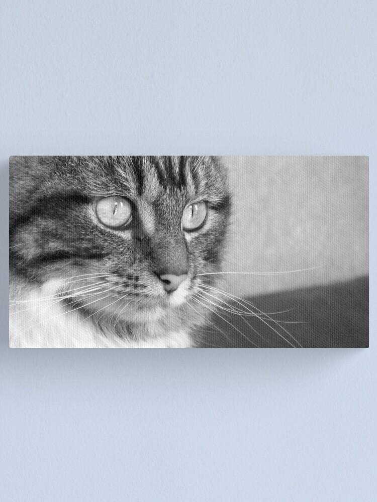 Alternate view of Cat's Catchlights Canvas Print