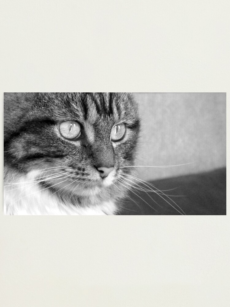 Alternate view of Cat's Catchlights Photographic Print