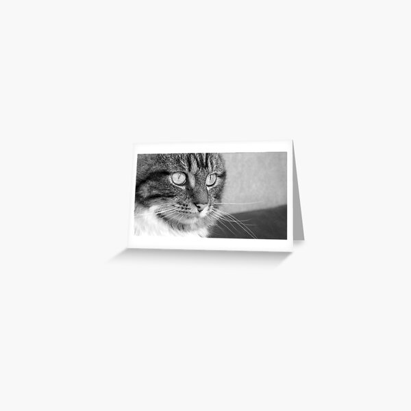 Cat's Catchlights Greeting Card