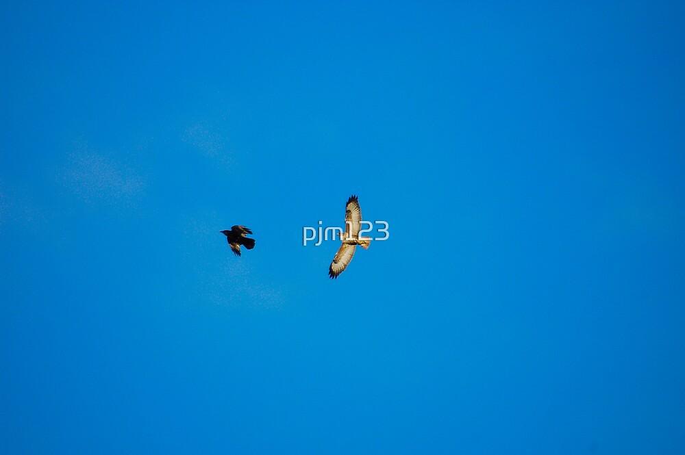 Buzzard Buzzed by pjm123