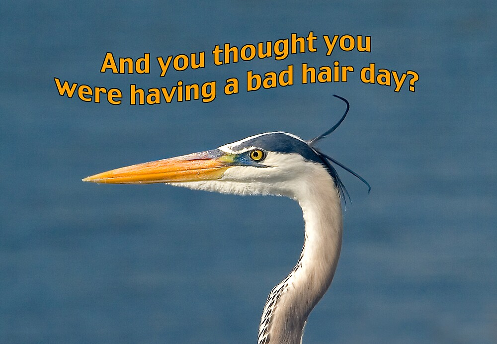 Great Blue Heron Having a Bad Hair Day Greeting Card by Delores Knowles