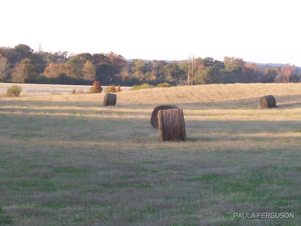 Alabama field by PAULA FERGUSON
