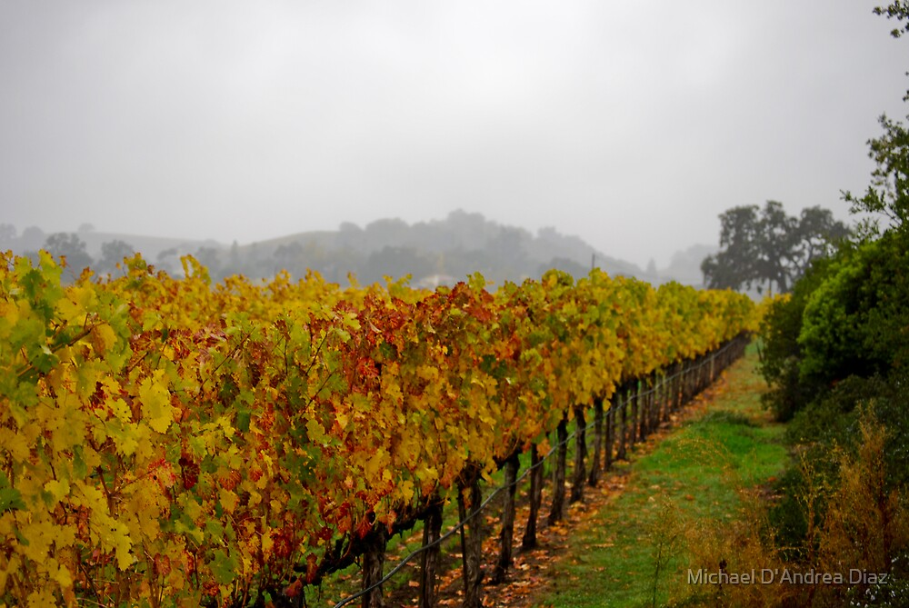 Napa In Fall by Michael D'Andrea Diaz