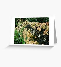 Mushrooms on a log, Pachuca Forest Greeting Card
