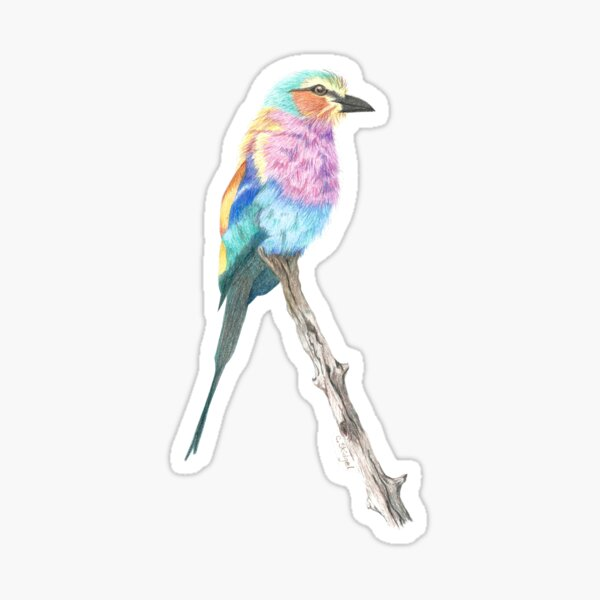 Lilac-Breasted Roller - Colored Pencil Sticker