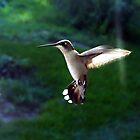 In Flight by Suni Pruett
