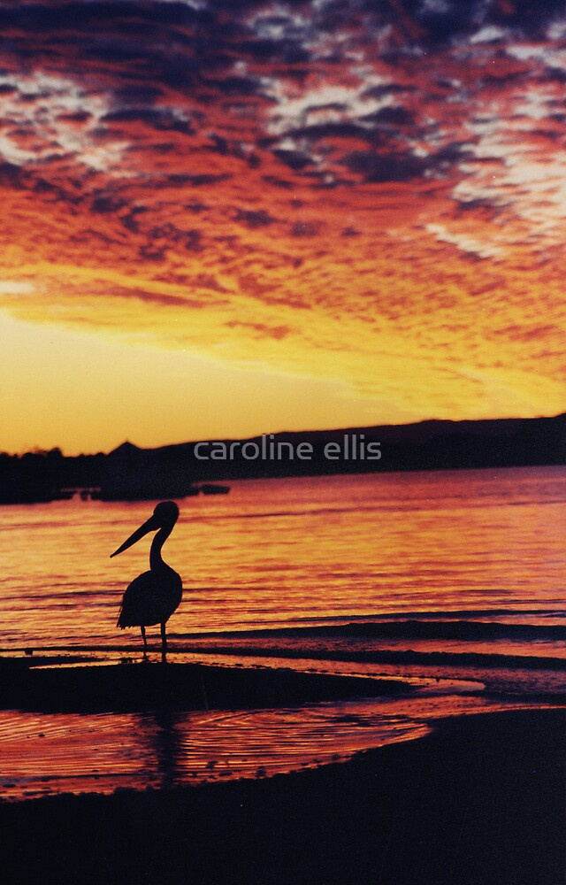 pelican silhouette by caroline ellis