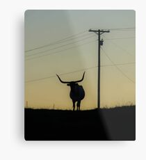 Longhorn at Sunset Metal Print