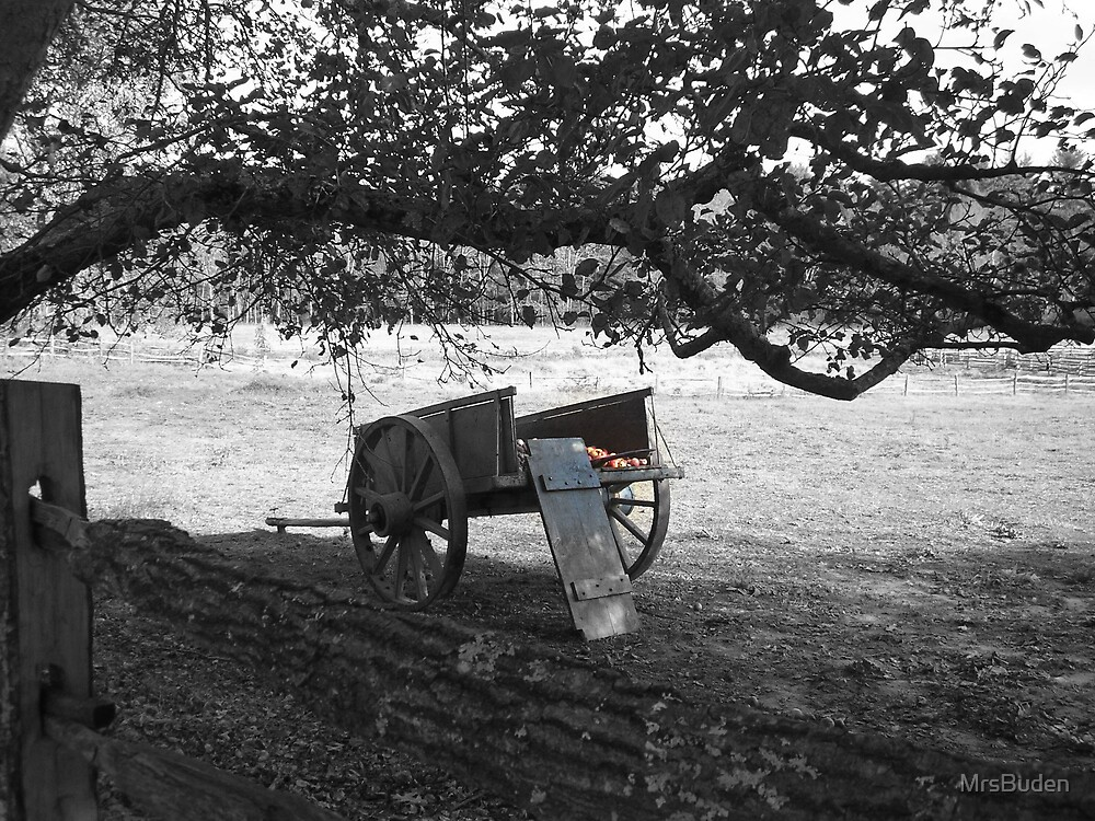Wagon of red delicious apples by MrsBuden
