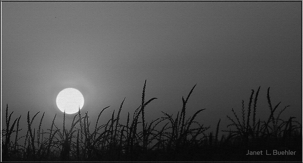 BY THE MOONLIGHT by Janet  L. Buehler