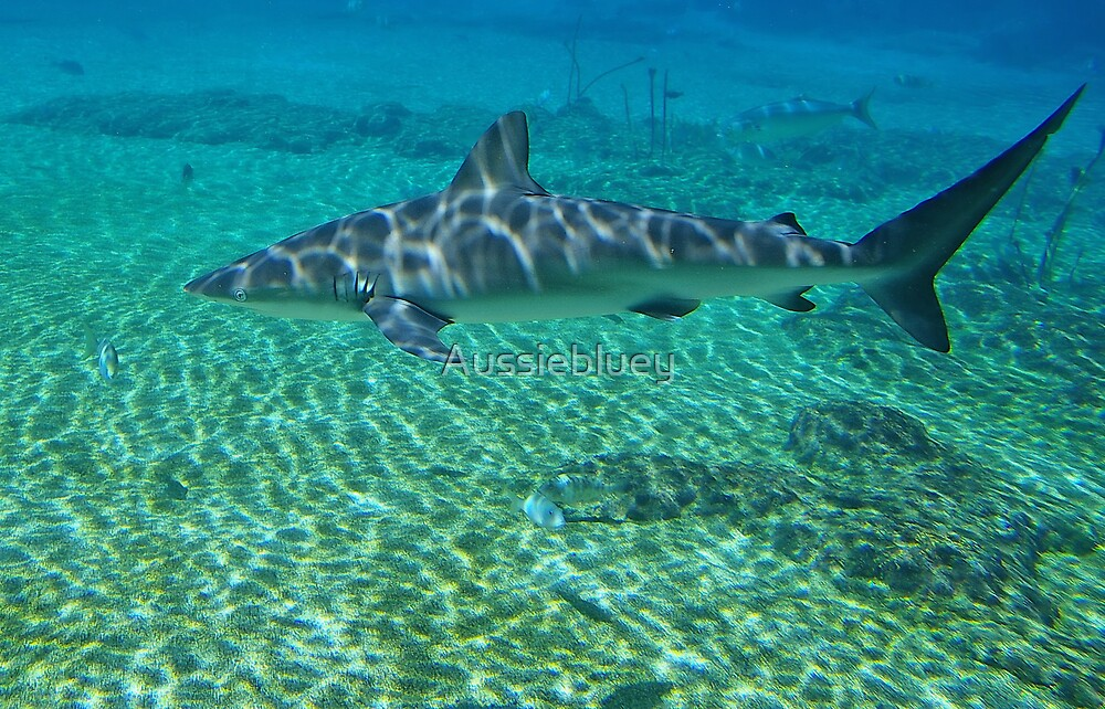 Shark,3 by Aussiebluey