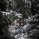 snowy Oregon forest 5 by Dawna Morton