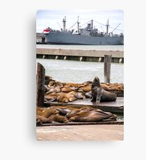 Sea Lions at Fisherman's Wharf Canvas Print
