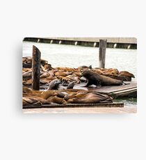 Sea Lions at Fisherman's Wharf in SF Canvas Print