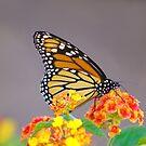 Autumn Monarch by Lisa Putman