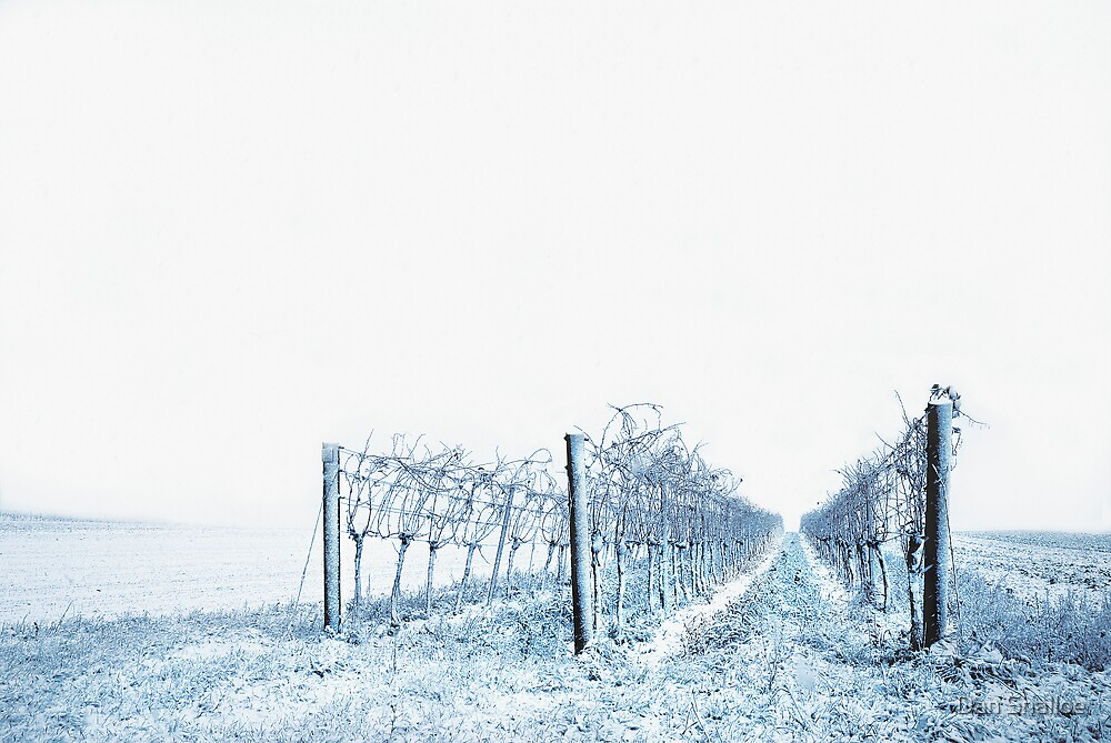 winter wine by Dan Shalloe