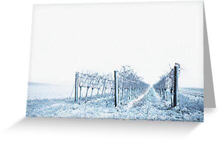 winter wine by Dan Shalloe