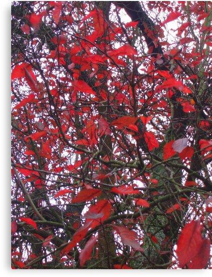 Red Leaves by Paul Finnegan