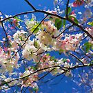 """""""Cherry Blossoms""""  by kcd-designs"""