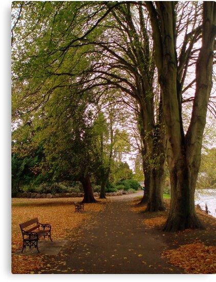 Autumn Walk by Paul Finnegan