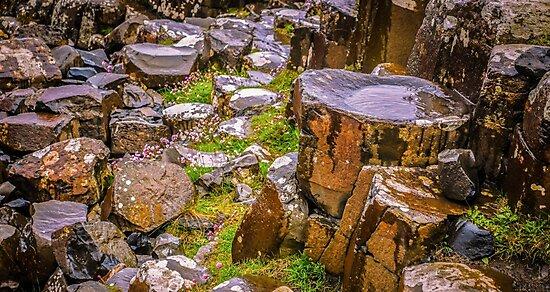 Ireland 'Rocks' - Giants Causeway, Northern Ireland #10 by Lexa Harpell