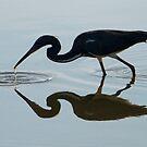 Silhouette, Tri Colored Heron by SuddenJim