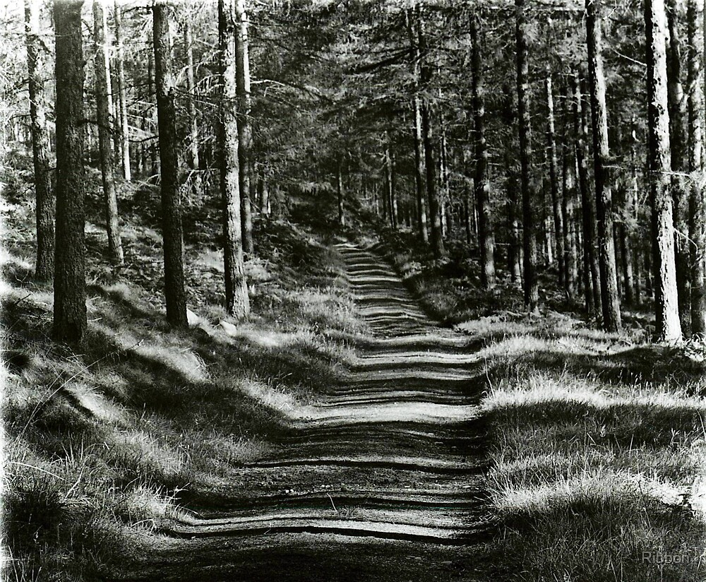Forest Trail by Ribbon