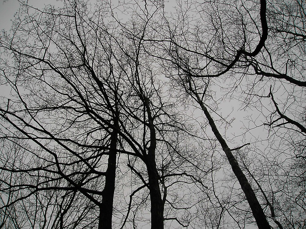 Winter Trees by Sam Riggs