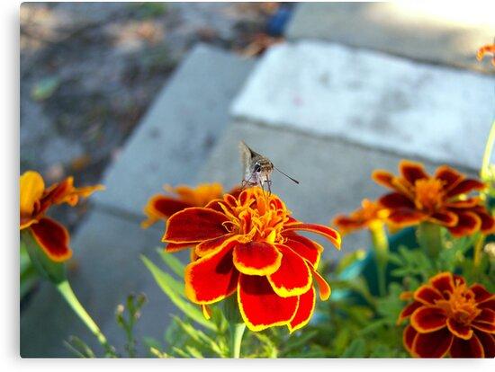 moth by tomcat2170
