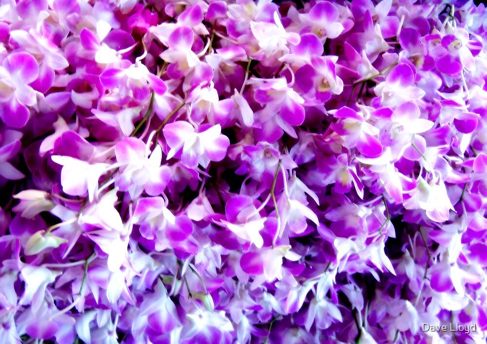 Purple Mist by Dave Lloyd
