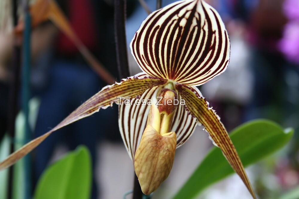Orchid by Teresa Zieba