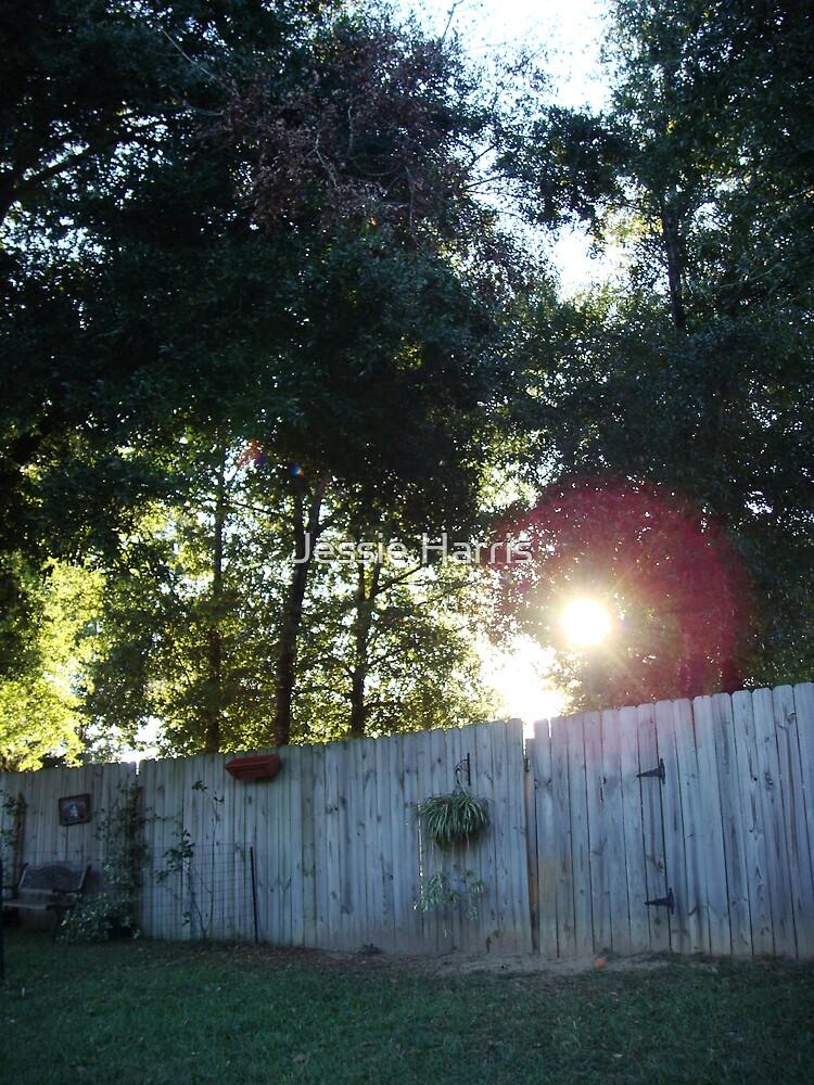 Secret Garden II by Jessie Harris