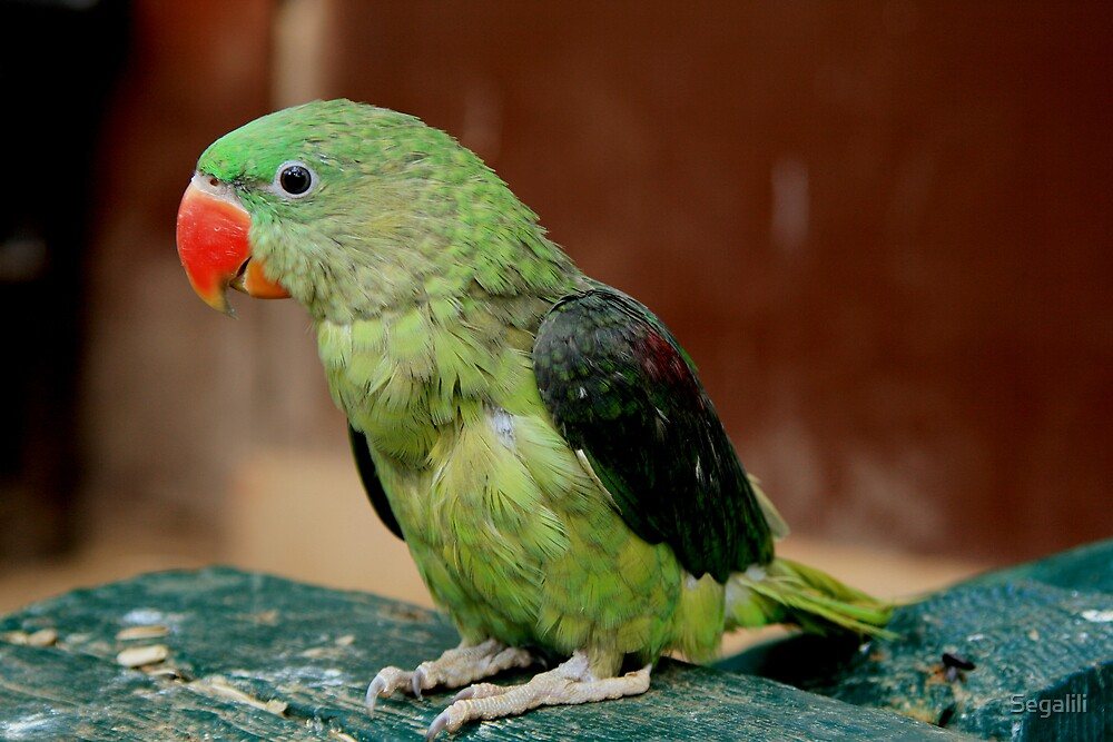Green Parrot by Segalili